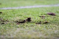 Piłkarze ocenili murawy. Suzuki Arena w środku stawki